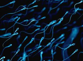 好奇 | 关于精子和卵子的小迷思